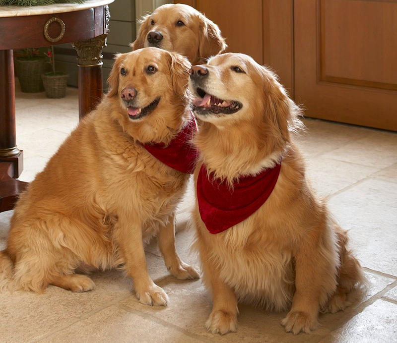 Decorating ideas making a pet friendly home traditional home - Make house pet friendly ...