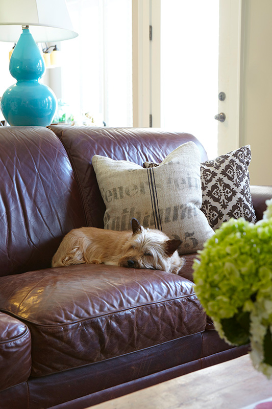 Pet Friendly Interior Design Ideas By Dkor: Decorating Ideas: Making A Pet-Friendly Home
