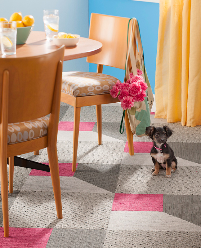 Decorating Ideas Making A Pet Friendly Home Traditional