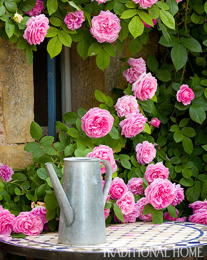 Roses In Garden: British Garden In The French Countryside